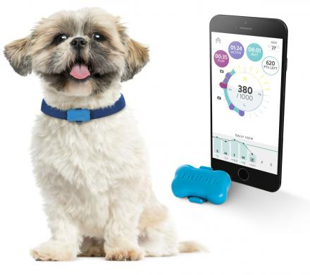 FitBark Is a FitBit For Your Dog