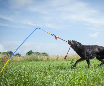 Tether Tug Is a Self Tugging Dog Toy You Stick Into The Ground