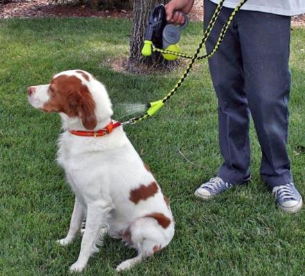This Dog Leash Has A Water Sprayer On It To Cool Your Dog Down On a Hot Day