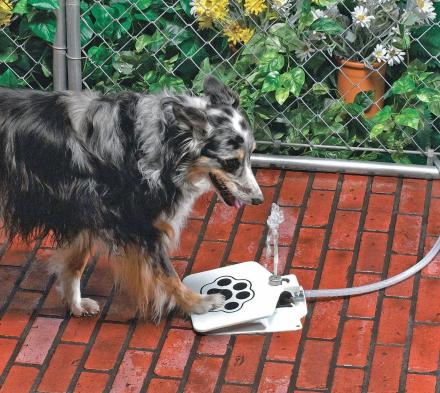 This Doggie Water Fountain Lets Your Dog Turn It On By Stepping On The Pedal