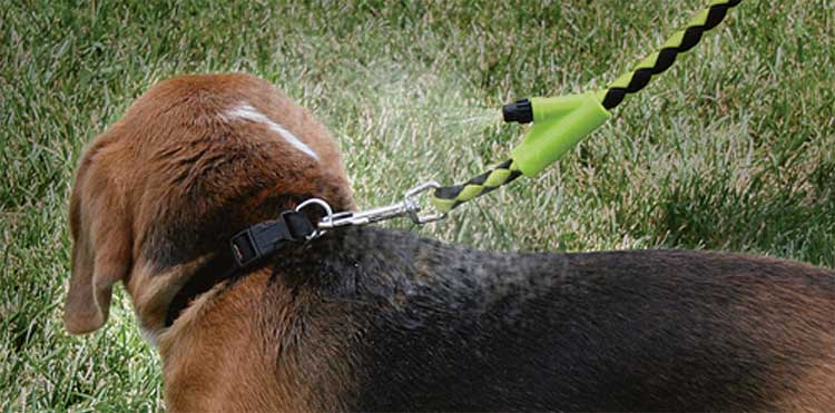 dog leash water mister