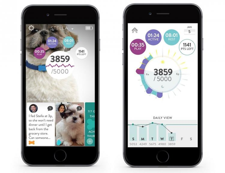 FitBark Dog Activity Tracker - Fitbit For Your Dog