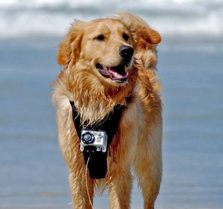 GoPro Camera Harness For Your Dog
