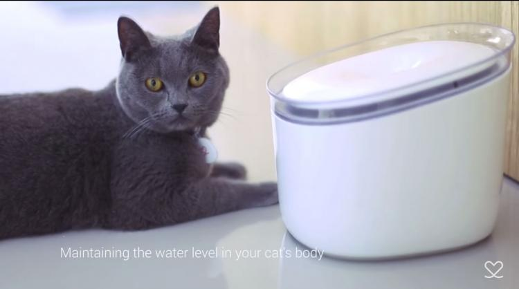 Pura Smart Cat Water Fountain