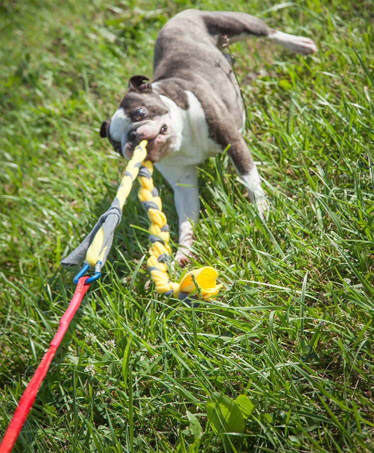 Tether Tug Self Tugging Dog Toy - Dog Tug-of-war with ground toy