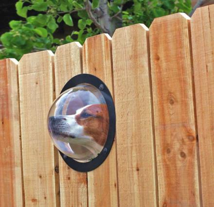 Pet-Peek: A Bubble Window For Your Dog To See Through The Wooden Fence