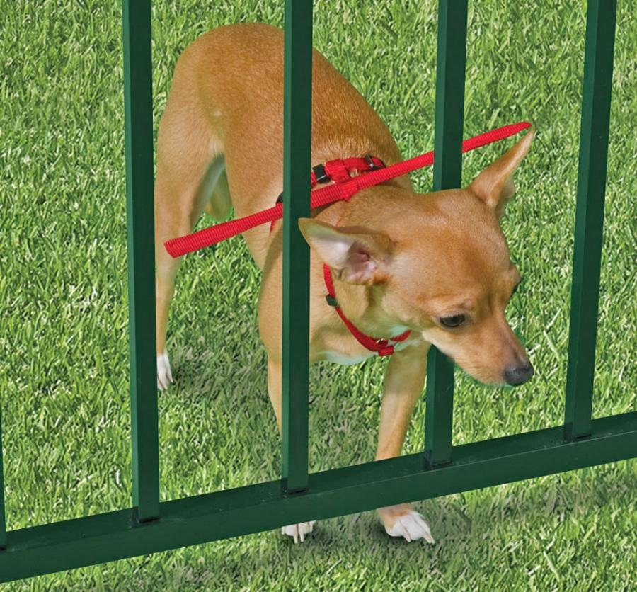 This Dog Harness Keeps Your From Escaping Through Fence Enlarge Image